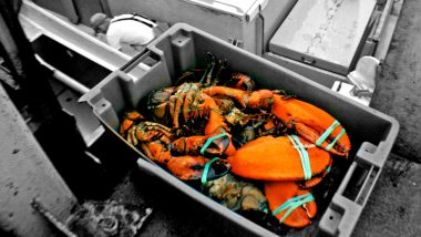 new-england-lobsters
